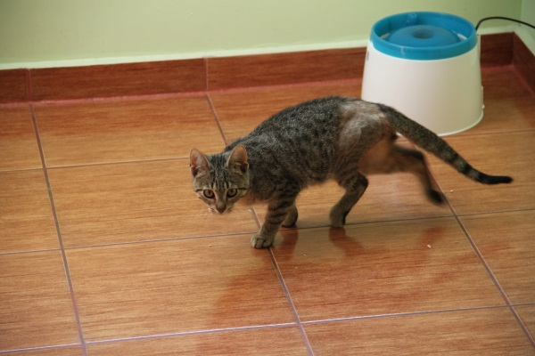 Fizjoterapia kota