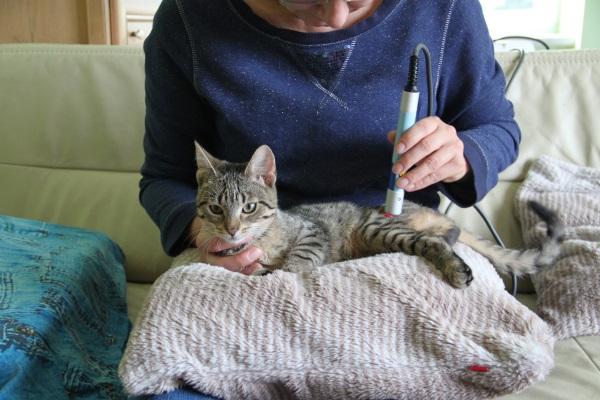Laseroterapia w leczenie u kota