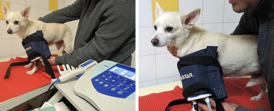 Magnetoterapia u psa