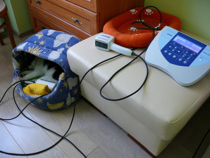 Zabieg magnetoterapii u kota