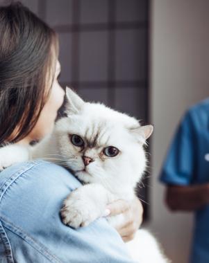 Laseroterapia wysokoenergetyczna do fizjoterapi zwierząt