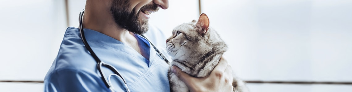 Sprzęt do fizjoterapii zwierząt - oferta